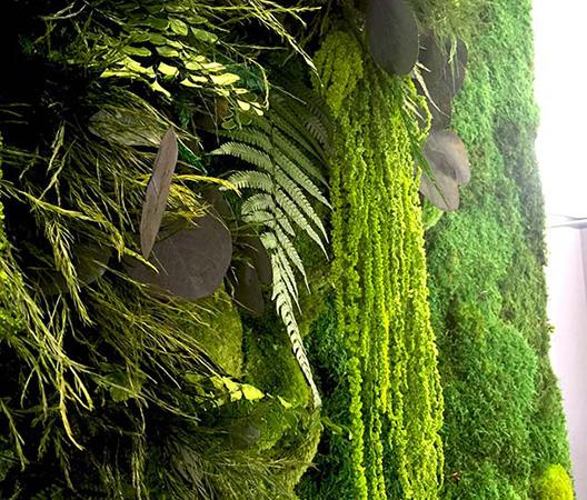 Cadres et murs végétaux 4