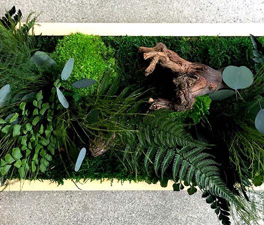 Cadres et murs végétaux 5