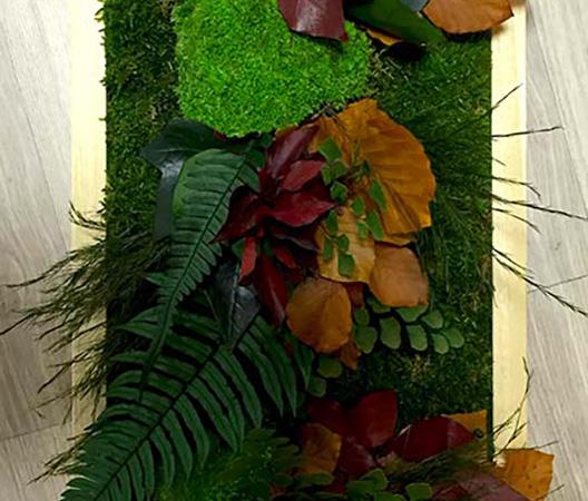 Cadres et murs végétaux 6