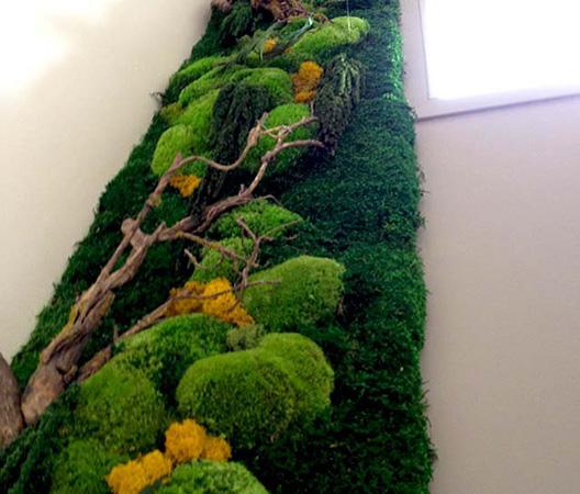 Cadres et murs végétaux 10