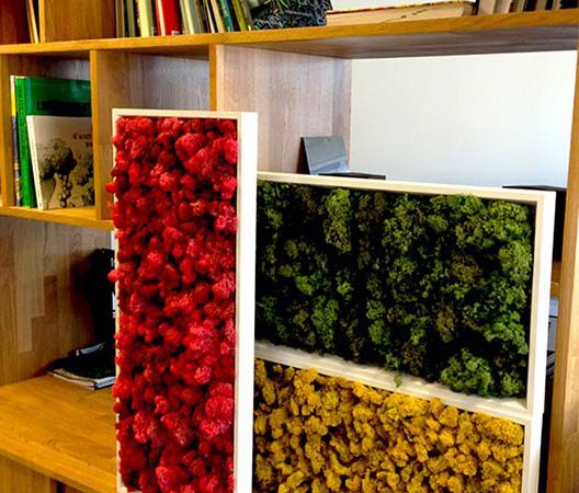 Cadres et murs végétaux 12