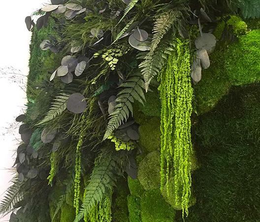 Cadres et murs végétaux 18