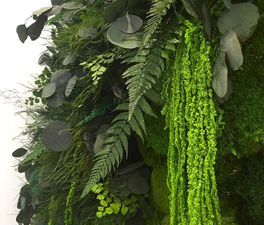Cadres et murs végétaux 20