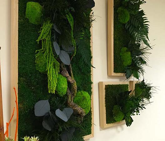 Cadres et murs végétaux 28
