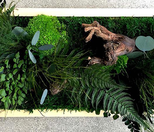 Cadres et murs végétaux 32