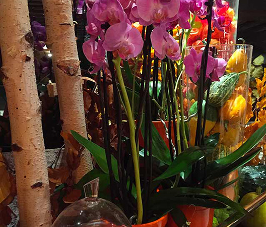 Composition d'orchidées 3