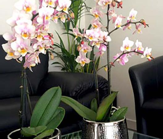 Composition d'orchidées 4
