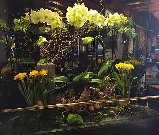 Composition d'orchidées 5
