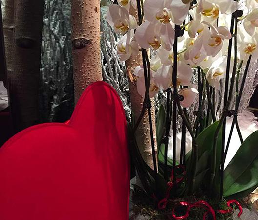 Composition d'orchidées 7