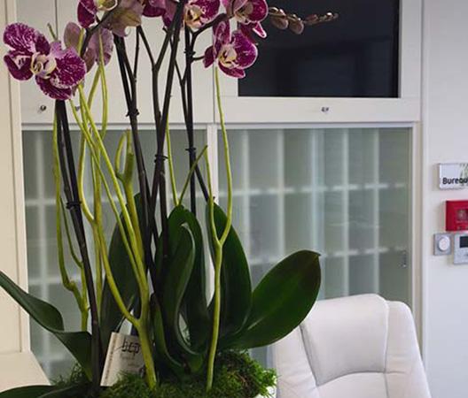 Composition d'orchidées 8