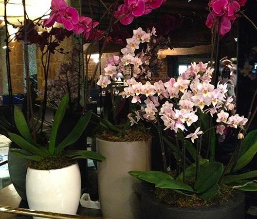 Composition d'orchidées 9
