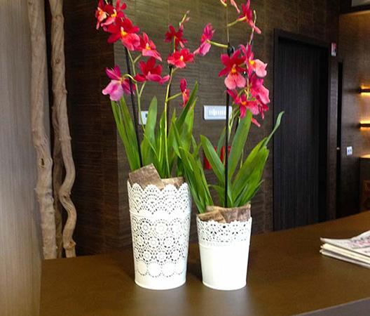 Composition d'orchidées 10