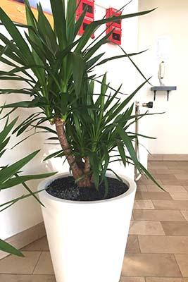 Entretien de plantes