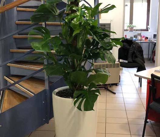 Entretien de plantes 3