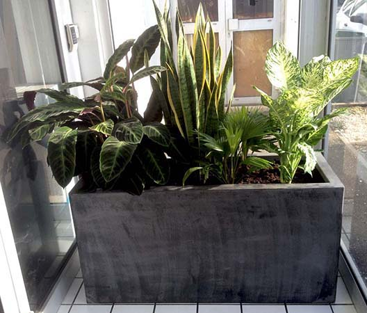 Entretien de plantes 7