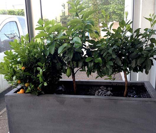 Entretien de plantes 8