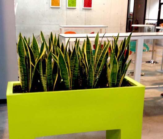 Entretien de plantes 10