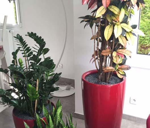 Entretien de plantes 15