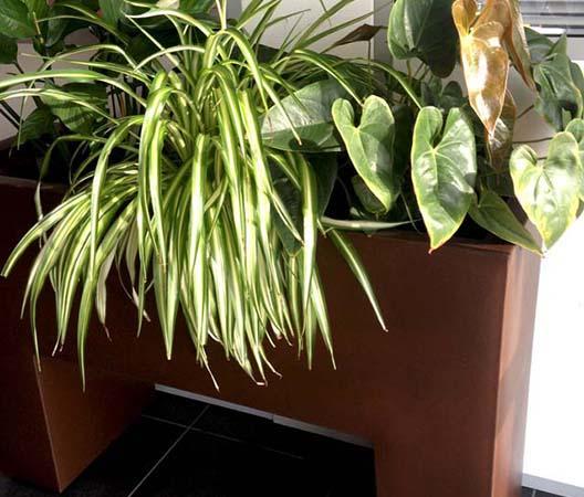 Entretien de plantes 16