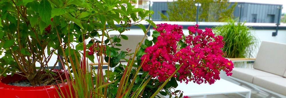 Terrasses végétalisées