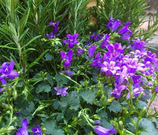 Terrasses végétalisées 3