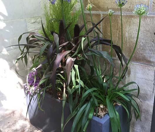 Terrasses végétalisées 4