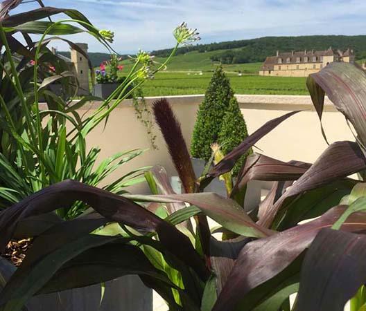Terrasses végétalisées 6