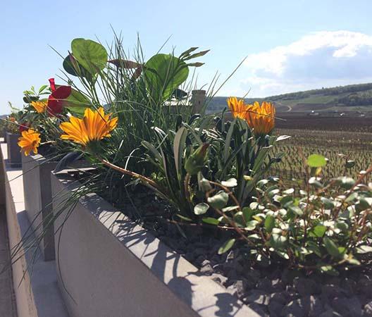 Terrasses végétalisées 15