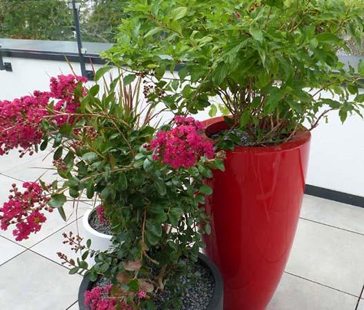 Terrasses végétalisées 19
