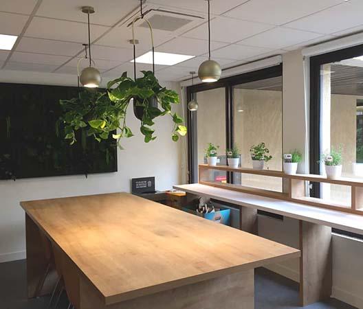 Locations de plantes à Dijon 5