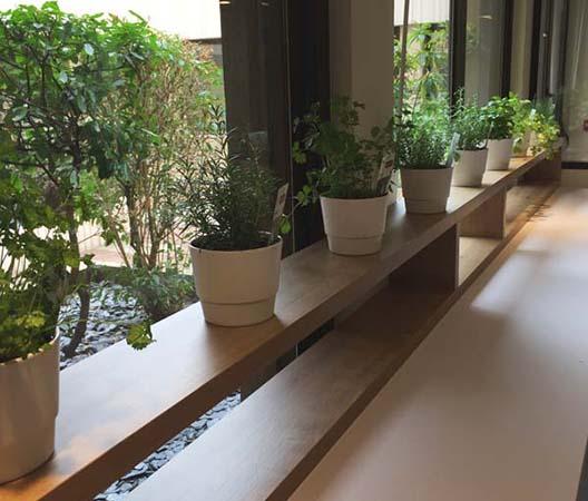 Locations de plantes à Dijon 6