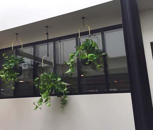 Locations de plantes à Dijon 8