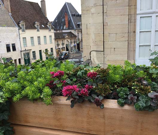 Terrasses avec plantes à Dijon